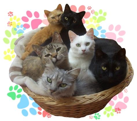 猫博の全にゃんこ達(みんニャ!)